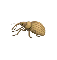 Weevil snout beetle icon insect pest control vector