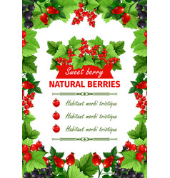 berry sweet fruit natural food banner template vector image vector image