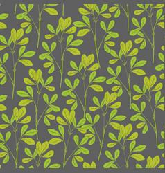 Botanical seamless pattern with fenugreek stems vector