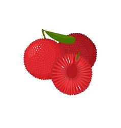 cartoon fresh yumberry fruit isolated on white vector image