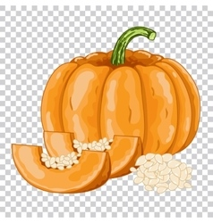 Pumpkin isolated organic food farm food vector image