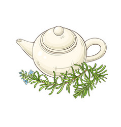 rosemary tea vector image