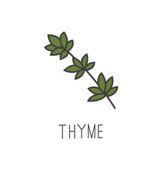 Thyme line cooking isolated vector