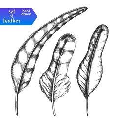Hand drawn feather set vector image vector image