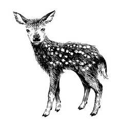 hand drawn baby deer in vintage style vector image