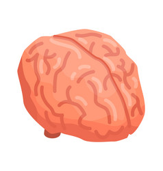 human brain icon isometric style vector image