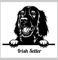 irish setter - peeking dogs - breed face head vector image