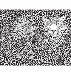 Leopard pattern background vector