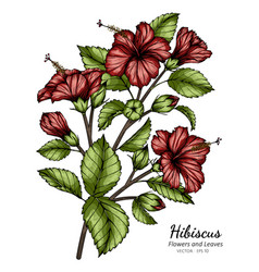 Red hibiscus flower and leaf drawing with line vector