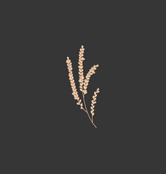 rice plant flat icon vector image