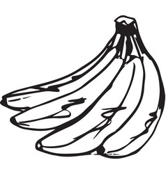 sketch of a delicious banana vector image