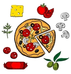 Sliced italian pizza with ingredients vector image
