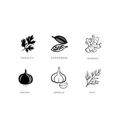 spices and condiments icons set parsley cardamom vector image