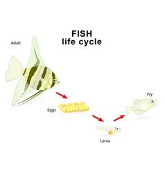 Fish life cycle vector image vector image