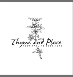 hand drawn herb thyme logo vector image