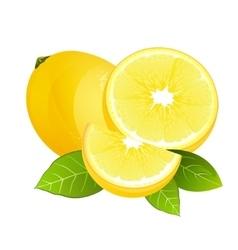 Fresh lemon fruit slice Realistic juicy citrus vector image vector image