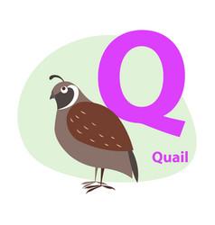 zoo abc letter with cute quail cartoon vector image