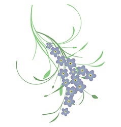 Forget me not flower vector image