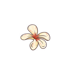 plumeria rubra hawaiian tropical flower in blossom vector image