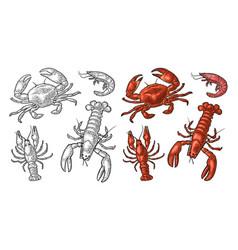 set sea animal crustacean lobster crab shrimp vector image