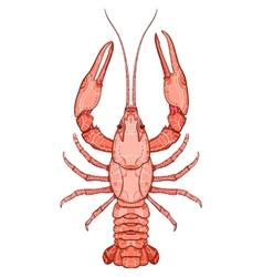 Decorative isolated crayfish vector