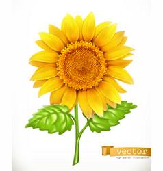 Sunflower 3d icon vector