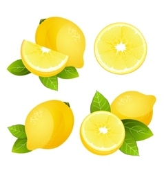 Fresh lemon fruit slice set Collection of vector image