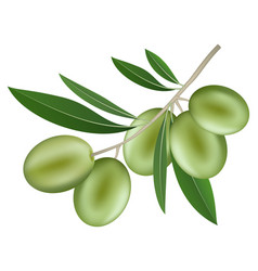 branch of olive icon realistic style vector image