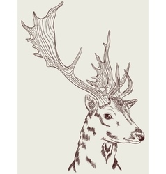 Doe graphic drawing vector image