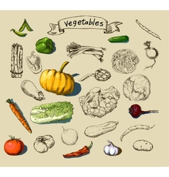 Hand-painted vegetables vector