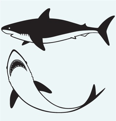 Silhouette shark vector image vector image