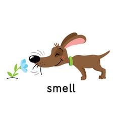 A dog sniffs flower five senses smell vector