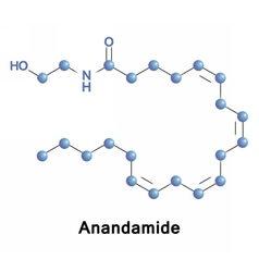 Anandamide fatty acid neurotransmitter d vector