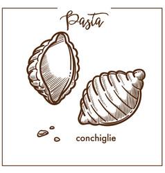 Pasta conchiglie chalk sketch icon for italian vector
