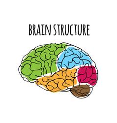 Brain structure nervous system medicine ill vector