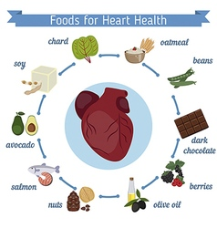 Healthy heart foods infographics vector