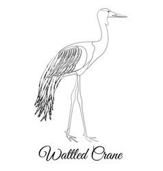 Wattled crane outline bird type coloring vector