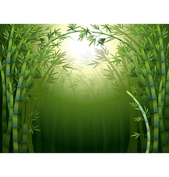 A bamboo rainforest vector image