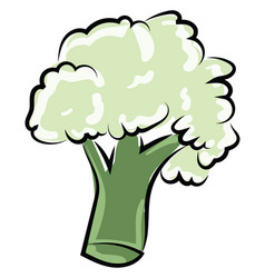 broccoli drawing on white background vector image