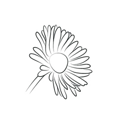camomile or daisy flower simple black lined icon vector image