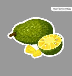 cartoon fresh jackfruit fruit isolated sticker vector image