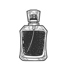 bottle perfume sketch vector image