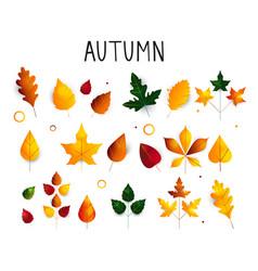 colorful set autumn leaves oak maple birch vector image