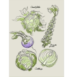 drawing of cabbage set vector image