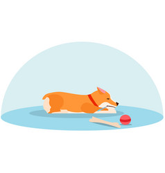 Lone welsh corgi is sad without an owner sick vector