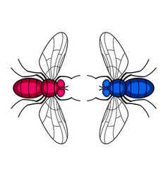 Two fly insects vector