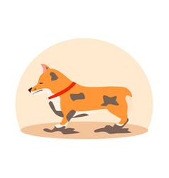 Dirty sad dog welsh corgi flat vector