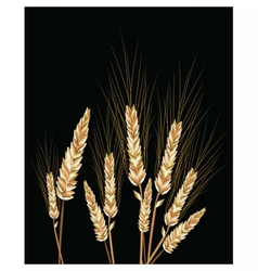 Wheat isolated on black vector