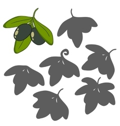 Olives with leaves vector image