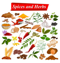 full collection of aromatic spices and herbs used vector image vector image